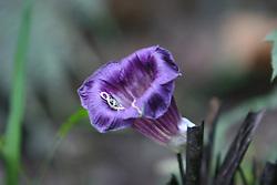 Flora in Machu Picchu Pueblo / Aguas Calientes, Peru<br />