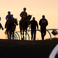 Thoroughbred Racing 2014 - Gallery 05