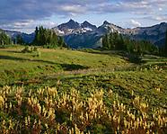 WASHINGTON - Mt. Rainier National Park