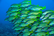 Hawaiian Fish Pictures