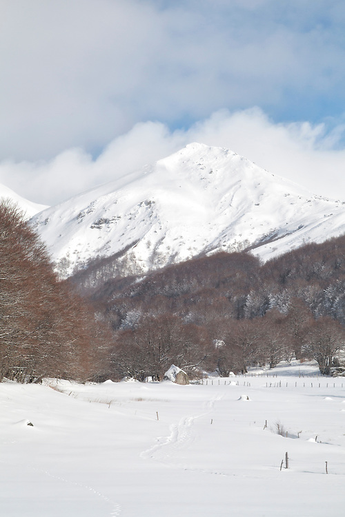 Puy de Sancy with some clouds around the top and trees in the foreground