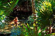 MEXICO, RIVIERA MAYA Cenote Azul near Playa del Carmen