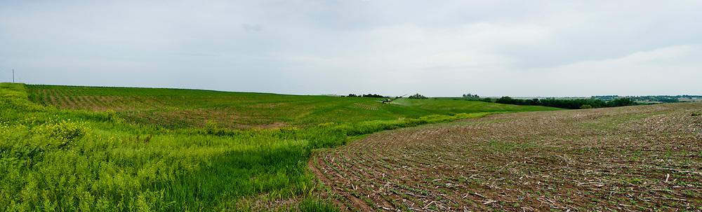 FMC Authority SRA Omaha photographed by Scott Drickey at Wiles Farm in Plattsmouth, Nebraska.