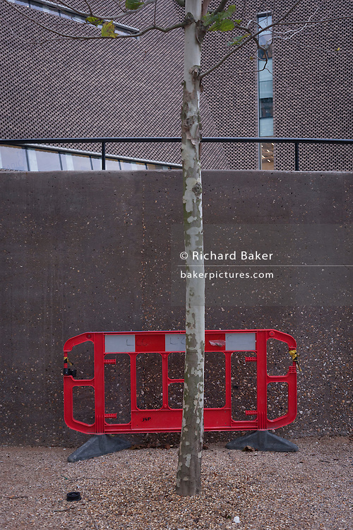 An urban tree and construction fencing outside Tate Modern art gallery, on 13th January 2017 in London, England.