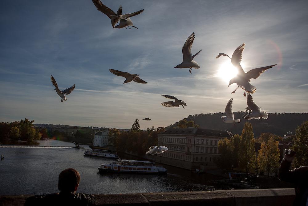 Möven an der Prager Karlsbrücke.