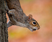 Squirrel Land