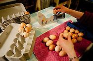 A farmer in Palmer, Alaska, readies home-grown eggs for market.