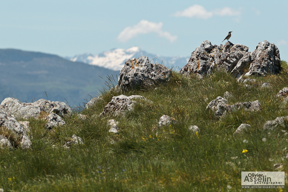 Bird perched on a stone near Col de Mente, Haute Garonne, France.
