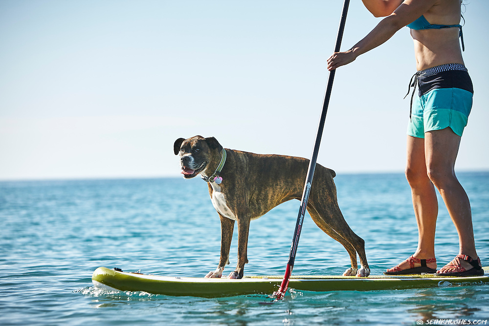 A woman and her dog stand up paddle (SUP) boarding in La Paz, Baja California Sur, Mexico.