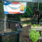 JULY 20, 2018---HATO REY, PUERTO RICO----<br /> Organic herb garden  at the headquarters of Chefs for Puerto Rico as food is prepared to be delivered during the day as part of the World Central Kitchen initiative in Puerto Rico which came to prominence following the aftermath of the devastation left by Hurricane Maria in Puerto Rico. <br /> (Photo by Angel Valentin/Freelance)