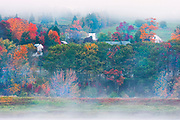 Houses along the St. John River in fog during autumn<br />