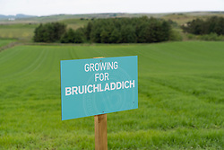 View of field growing barley for Bruichladdich Distillery on island of Islay in Inner Hebrides of Scotland, UK