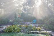 63821-23713 Sun rays in fog in flower garden, Marion Co., IL