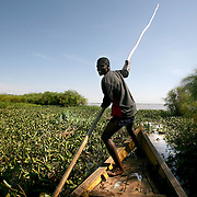 Juma Steven, a part-time fisherman, pilots his boat through thick blankets of water hyacinth. Pollution of the lake is causing water hyacinth to grow out of control and is a sign of the environmental problems affecting the lake.