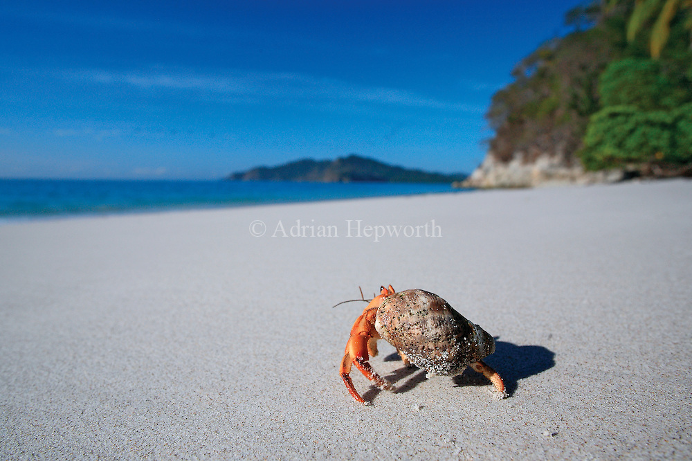 Hermit crabs are abundant on many of Costa Rica&rsquo;s beaches, where they play an important role in the decomposition of natural debris. They feed on leaf litter, dead animals, fallen fruit and decaying logs close to the high tide mark. I held my camera close to the sand and took a huge number of photographs while following this foraging crab across Quesera Beach in Curu Wildlife Refuge on the Nicoya Peninsula. The resulting back ache was worth the effort!<br />