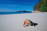 Hermit crabs are abundant on many of Costa Rica's beaches, where they play an important role in the decomposition of natural debris. They feed on leaf litter, dead animals, fallen fruit and decaying logs close to the high tide mark. I held my camera close to the sand and took a huge number of photographs while following this foraging crab across Quesera Beach in Curu Wildlife Refuge on the Nicoya Peninsula. The resulting back ache was worth the effort!<br />