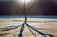 A dead camel thorn tree reaches for the sun, Deadvlei, Namib-Naukluft National Park, Namibia.