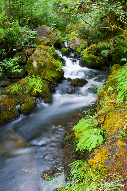 Ferns and cascade on Watson Creek, Umpqua National Forest, Oregon