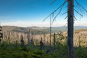 Toter Wald, Lusen, Nationalpark, Bayerischer Wald, Bayern, Deutschland | dead forest on Mt. Lusen, national park, Bavarian Forest, Bavaria, Germany