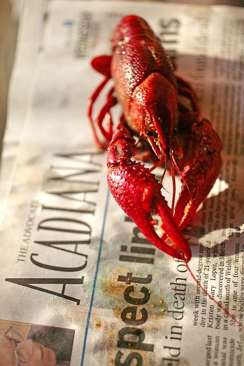 Crawfish. Photo by Chris Granger