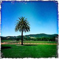 2013 May 13:  Sonoma wine country iphone Hipsta.
