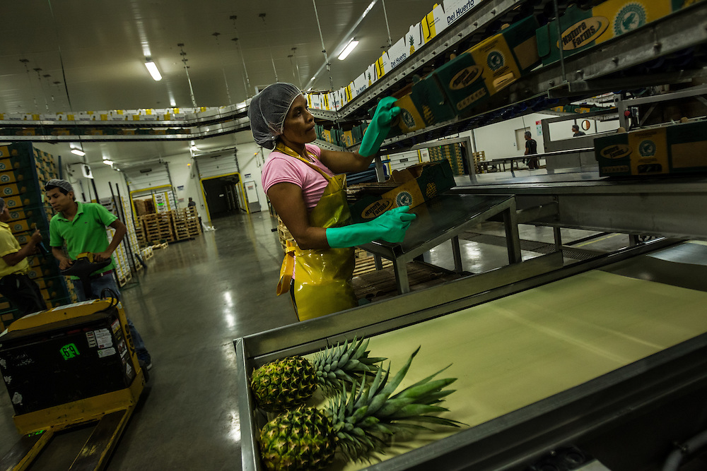 Workers box pineapples to be exported, from a private industrial farm in Costa Rica on January 13, 3014. Environmentalists claim the pineapple industry is contaminating the environment and local water supplies.