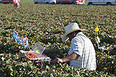 Migrant Workers California Farming