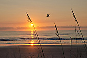 Florida Sunrises and scenery - click picture to enlarge or order