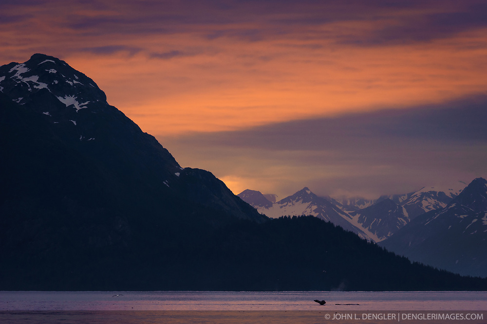 A humpback whale dives in the Sitakaday Narrows of the main bay of Glacier Bay National Park and Preserve in this view at sunset seen from Young Island located in the Beardslee Islands of the park in southeast Alaska. In the near background is Marble Mountain and in the far background is Mt. Abdallah.