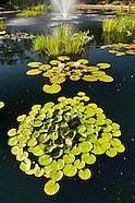 20070906 Water Garden