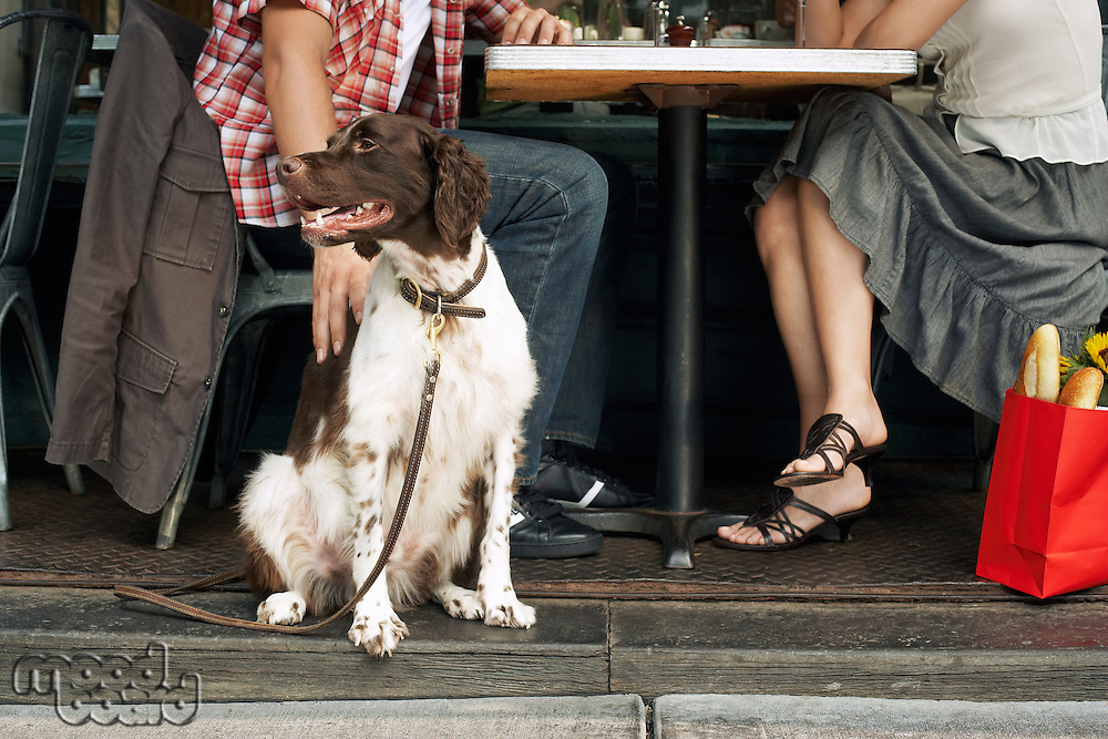 Dog and Owners Sitting at Sidewalk Cafe