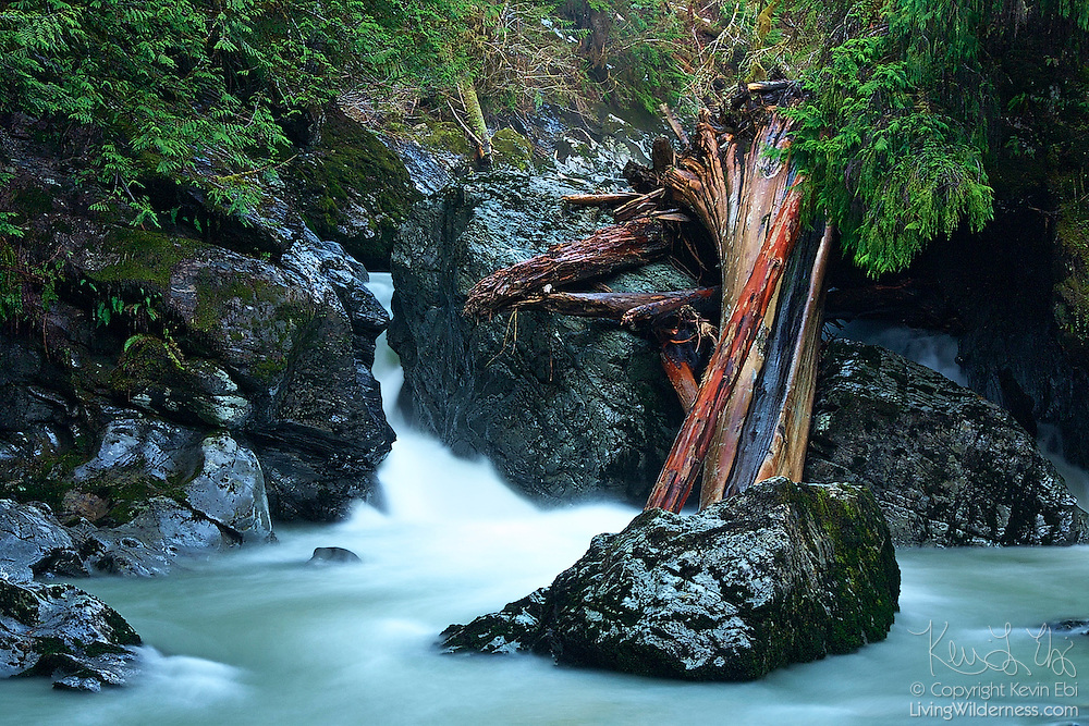 The Boulder River squeezes through a narrow crack in the rock near Darrington in Washington's Central Cascades. The water's milky appearance is due to an extended exposure. A large cedar tree that fell in a storm is trapped by one of the large rocks in the river.
