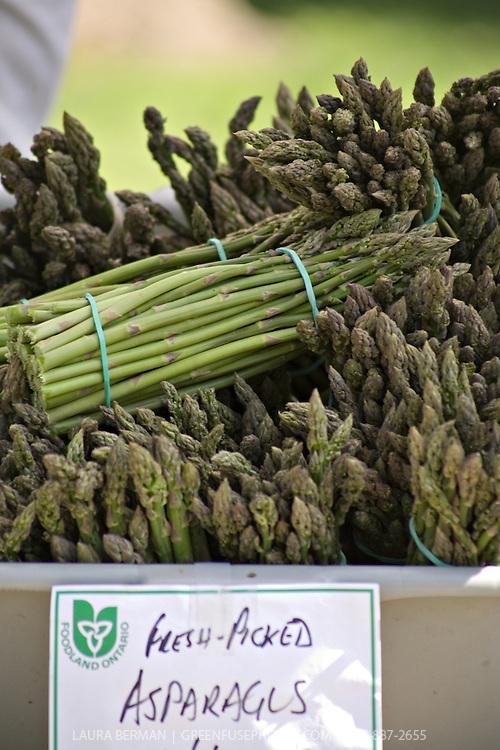 Fresh picked organic Ontario asparagus