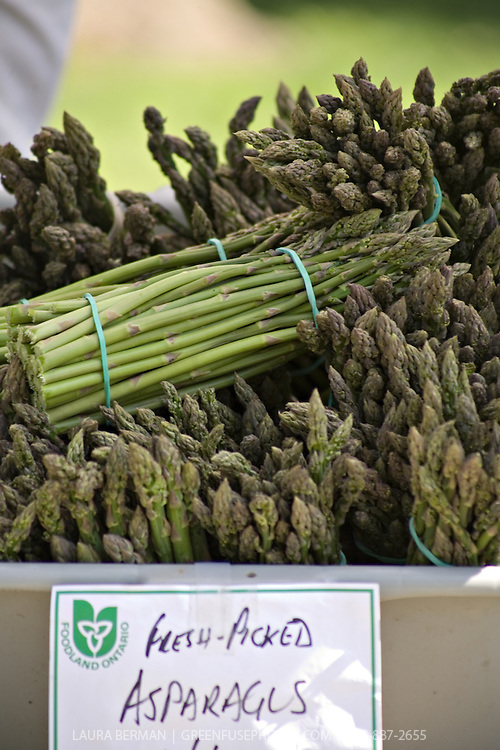 Fresh picked organic Ontario asparagus