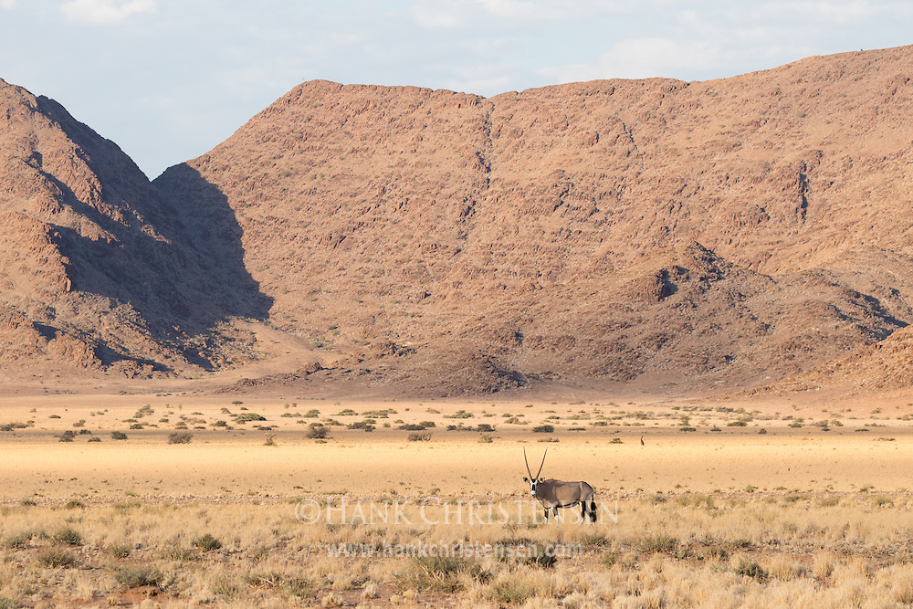 A gemsbok oryx grazes in the desert savanna of western Namibia, orange red mountains rising dramatically behind.