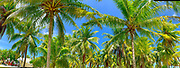 Copra, Coconut Plantation, Fakarava, Tuamotu Islands, French Polynesia, South Pacific