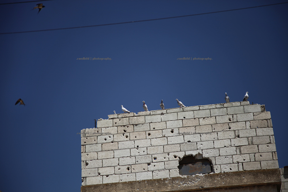 Pigeons and martins sitting or flying around a bullet sprayed hous top. Taftanaz northeast of Idlib city was seriouosly attacked in April by helicopters from a nearby air base. dozens of houses were bombed to the ground and many peolpe were killed as well.