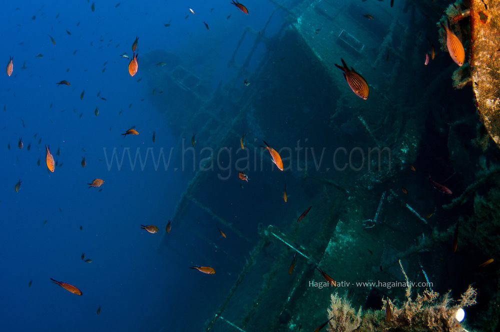 diving the Zenobia wreck in Larnaka - Cyprus