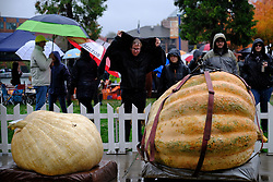 People look at giant pumpkins on display at the 14th annual West Coast Giant Pumpkin Regatta in Tualatin, Ore. on October 21, 2017. (Photo by Alex Milan Tracy)