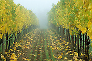 Willakenzie Estate, Willamette Valley, Yamhill-Carlton, Oregon