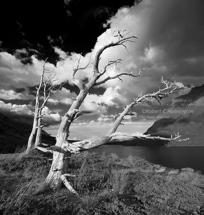 Dead trees and a clearing storm over Lake St.Mary, in a monochrome study of Sun Point, Glacier National Park.