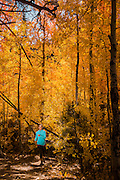 Fall colors in Reno with Monique Sady trail running through the aspen on the Thomas Creek trail in Reno, NV.
