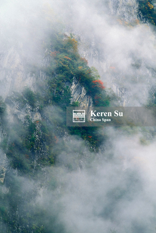 Mountain in mist, Wolong Valley, Panda's home, Sichuan Province, China