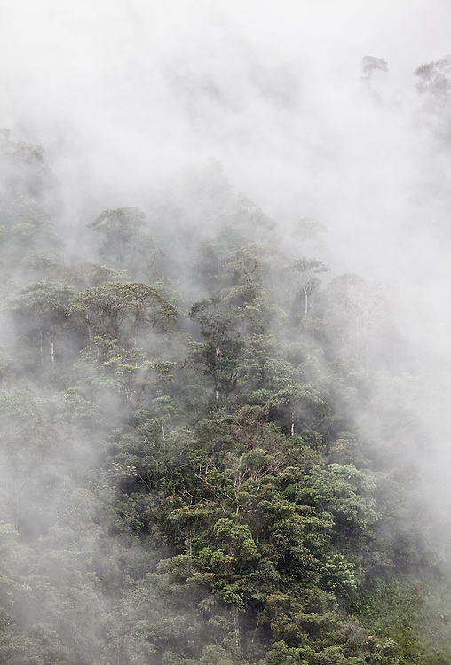 Steamy rainforest extends as far as the eye can see as we descend into the Chocó.