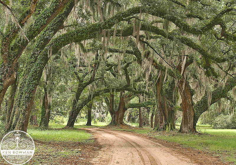 Hampton Plantation Avenue of the Oaks. Santee Wildlife Management Area.