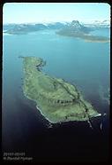 01: SEABIRDS EIDERS AT VIGUR ISLAND