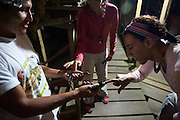 Travelers check out newly hatched Caimans - Amazonas - Peru