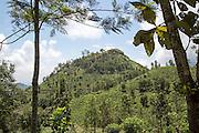 View from 98 Acres resort luxury lodges, Ella, Badulla District, Uva Province, Sri Lanka, Asia view to Little Adams Peak