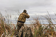 Photo No 3 of series - Hunter kills canvasback drake on open water marsh.