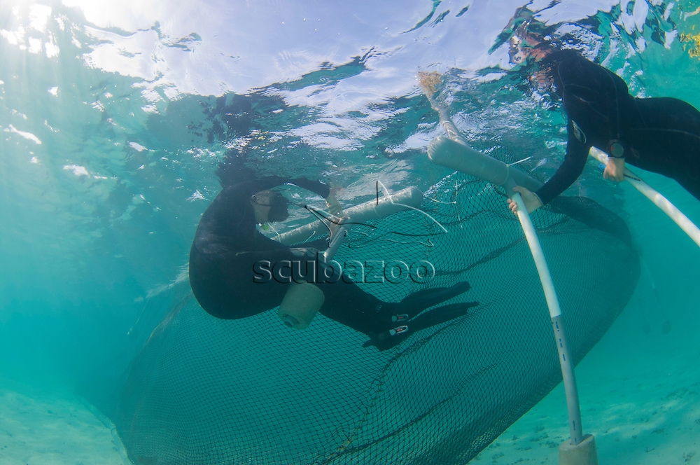 Snorkellers working to modify the shorter Concrete counterweights of a water-borne enclosure for studying sea turtle's, Mantanani, Sabah, Malaysia